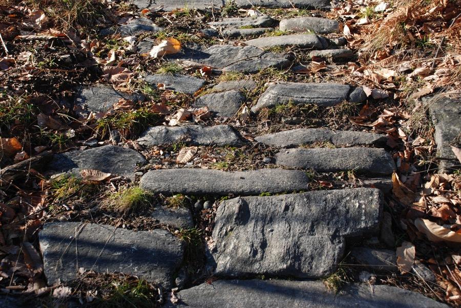 Il sentiero dei castagneti