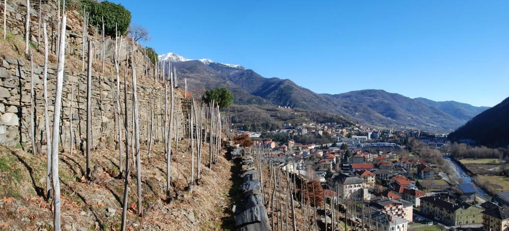 Le vigne di Pomaretto