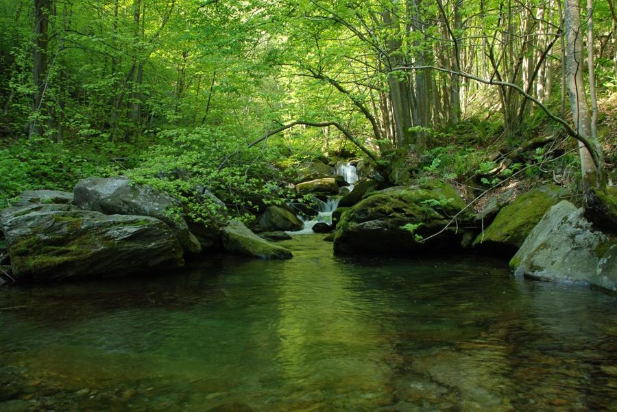 Il Rio Risagliardo di Pramollo