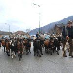 Anche le capre in parata a Dubbione