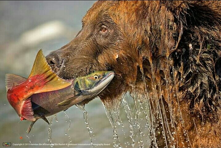 """Neverending Story"" (orso con salmone)"