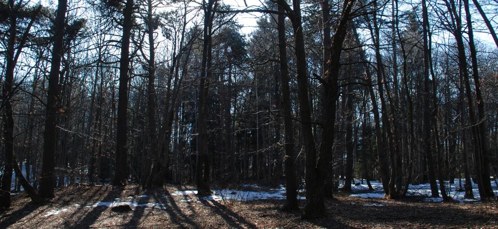 Il bosco del lupo