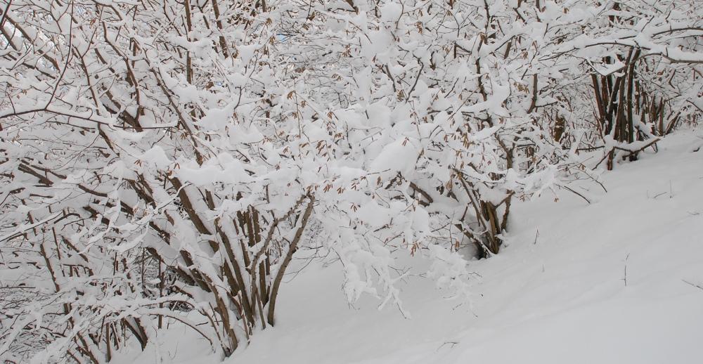 Noccioli sotto la neve