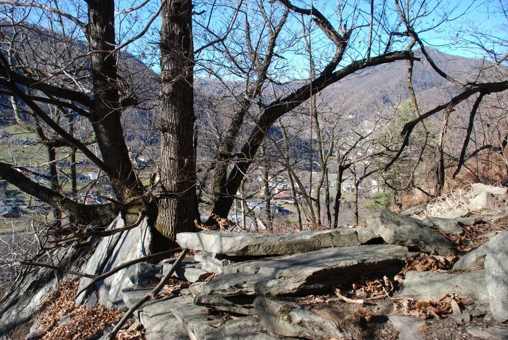 Il castagno nella roccia