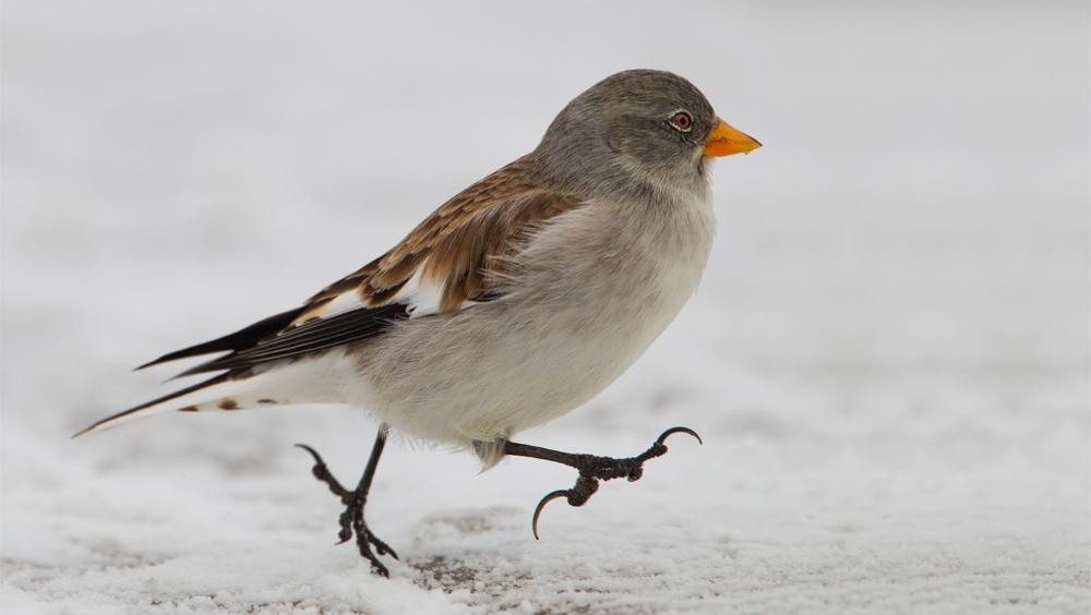 L'uccellino del torrente Risagliardo - f.to F Moglia