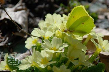 Buona Primavera