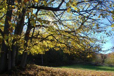 Pensieri d'autunno