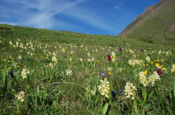 Le prime orchidee